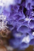 Depth of Winter by Janie Allen