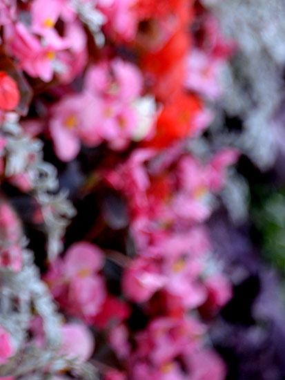 art prints - Pink Blush II by JD