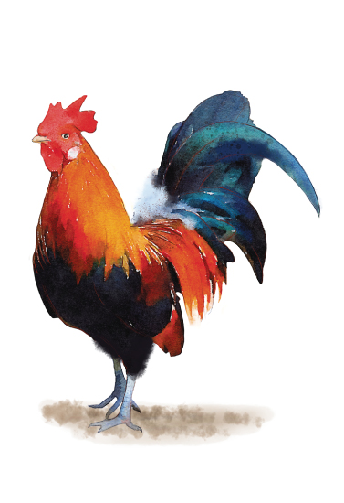 art prints - Rooster by Cassandra Imagines