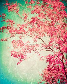 Enchanted Woods II
