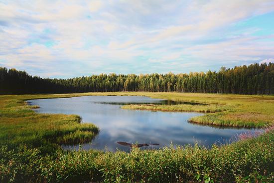 art prints - Alaskan Daydream by Debbie Shiffer