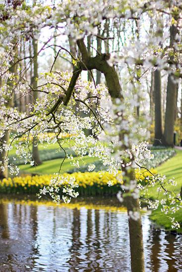 art prints - Almond Blossoms by Ashley Daley
