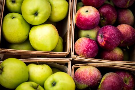 art prints - An Apple A Day by Janet Cruz