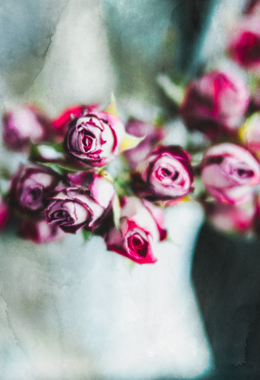 art prints - Dried Roses by Helen Makadia Photography