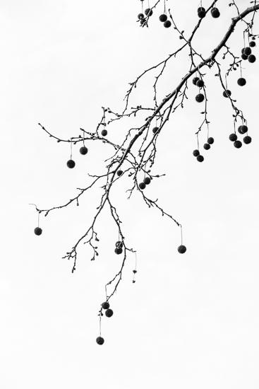 art prints - Platano by Ana Gencarelli