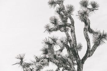 Joshua Tree in September