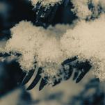 Snowflake by Sydnie Horton