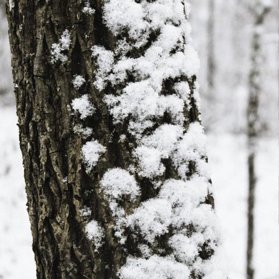 art prints - Deep In The Snowy Woods by Sydnie Horton