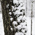 Deep In The Snowy Woods by Sydnie Horton