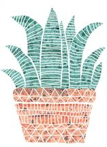 The Zebra Cactus by Marie Hermansson