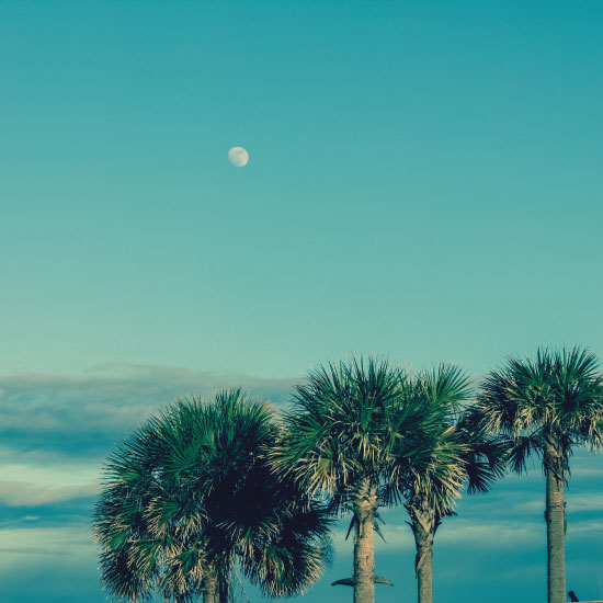 art prints - Gulf Coast Palms by Sydnie Horton