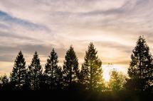Sonoma Treeline by Brad Rhodes