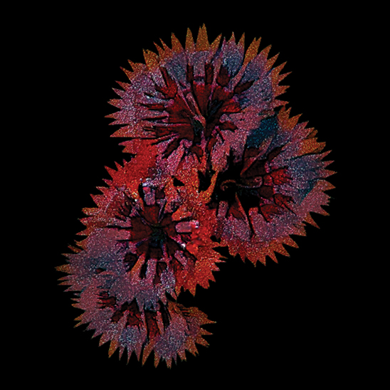 art prints - Abstract Floral Art by Jenny Rajan Valiaveetil