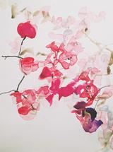 Bougainvillea  Kisses by Betsyness Studio