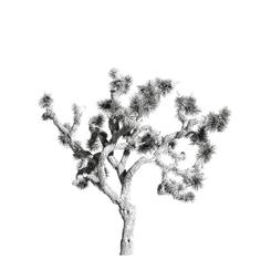 A simple Joshua Tree 2