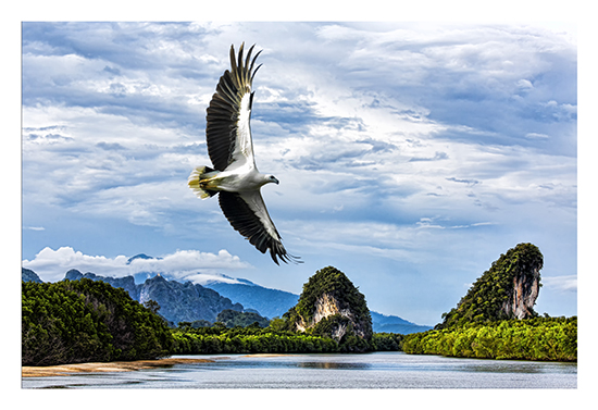 art prints - Sea Eagle over Cha Fa River, Krabi City, Thailand by Leslie Ware
