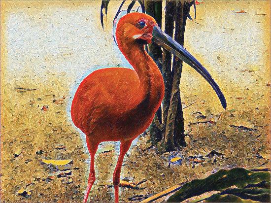 art prints - Scarlet Ibis - Red Heron by Jenny Rajan Valiaveetil