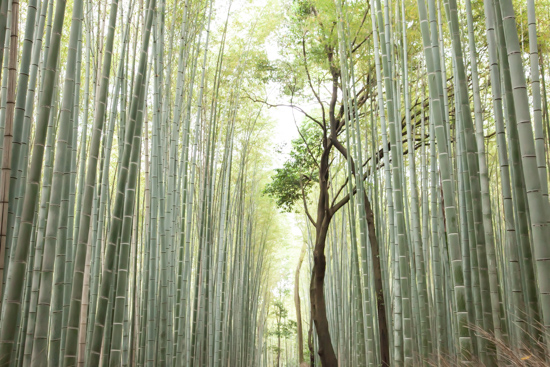 art prints - Bamboo Wonder by Faith Roper Constant