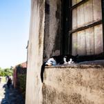 Uruguayan Cat by Marcela Perdomo