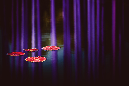 art prints - lilypads by Alicia Abla