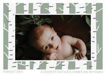 Baby Birch by Jacquelyn Kellar