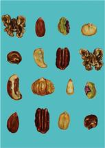 Go Nuts! by Janie Allen