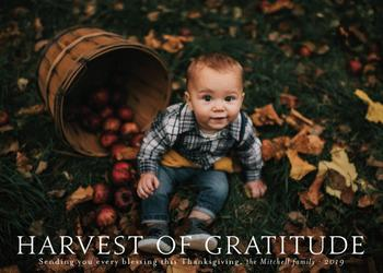 Harvest of Gratitude
