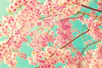 Cotton Cherries