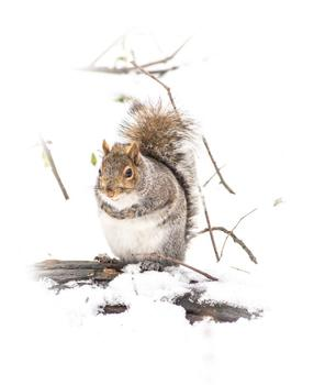 Squirrels of NYC 1