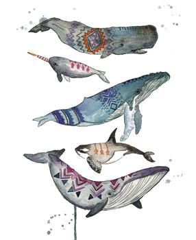 Tribal Whales