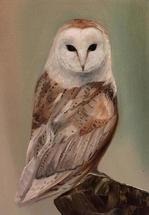 Barn Owl Standing by Laura Blue Palmer