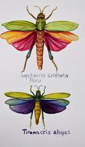 Bright Grasshopper by Cathleen Earle
