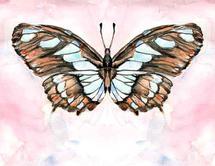 Victorina Butterfly by Melissa Hyatt