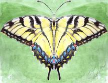 Swallowtail Butterfly by Melissa Hyatt
