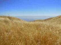 Golden Hills by Nancy Gold