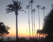Palm Trees by Sarah Cohn