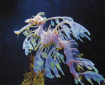 Dreamy Leafy Sea Dragon by Aure