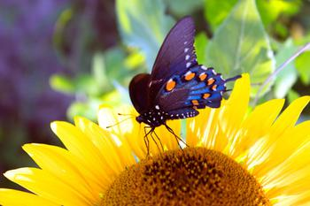 Happiness is a Butterfly