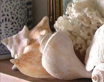 Shell Alter by Ashley Slade Mast