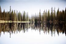 Reflecting by Regan Daniels