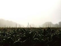 morning haze by Sondra Lucianovic