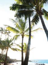 Palm Trees 2 by Kathy Par