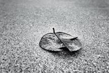 leaf by Sondra Lucianovic