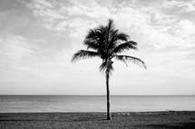 Beach Tree by Janet Cruz