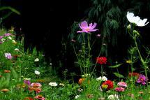Wildflowers by JD