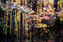 Peaceful Trees by Sydni Choy