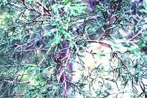Ever Green by Sydni Choy