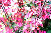 Pretty In Pink by Sydni Choy