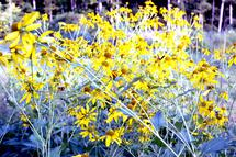 Happy Yellow by Sydni Choy