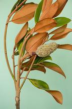 Magnolia Sway by Laura Lejuwaan